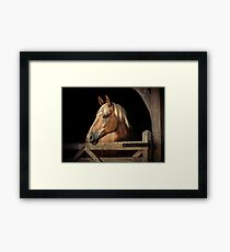 Suffolk Punch Horse Framed Print