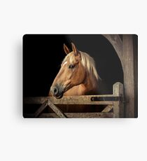 Suffolk Punch Horse Metal Print