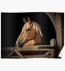 Suffolk Punch Horse Poster