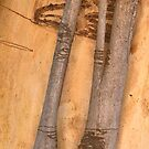 The Tree Bark Collection # 27 - The Magic Tree by Philip Johnson