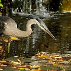 Stalking the pond by Heather King