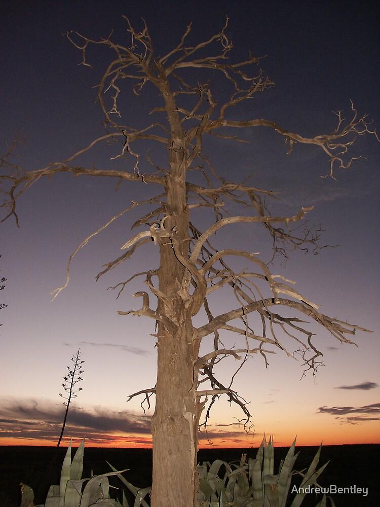 Ivanhoe Tree #410 by AndrewBentley