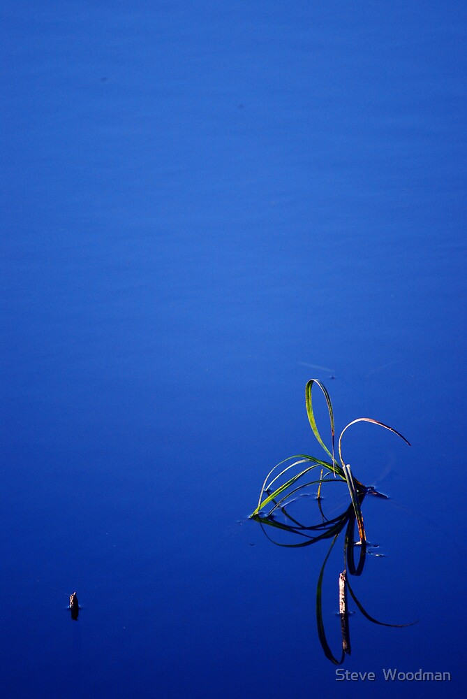 Reed by Steve  Woodman