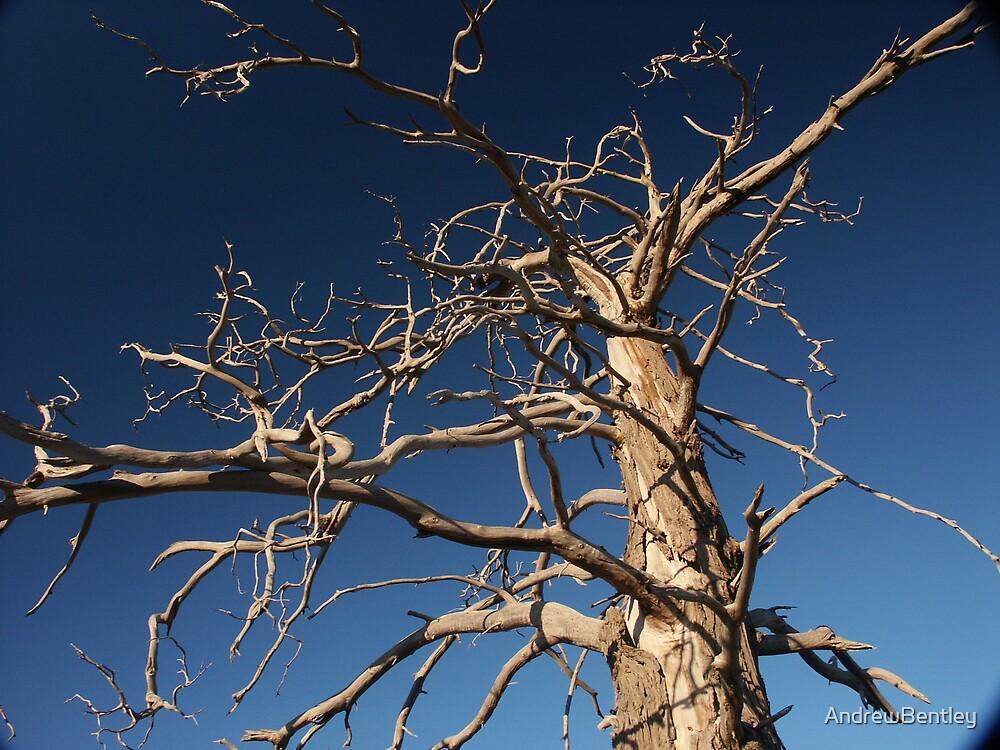 Sky Branches by AndrewBentley