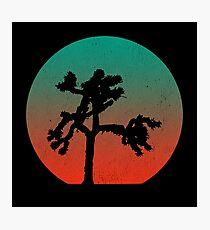 Joshua Tree at Dawn Photographic Print