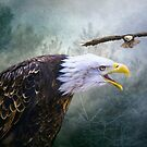 Eagle Territory by Brian Tarr