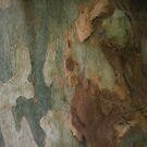 The Tree Bark Collection # 25 - The Magic Tree by Philip Johnson
