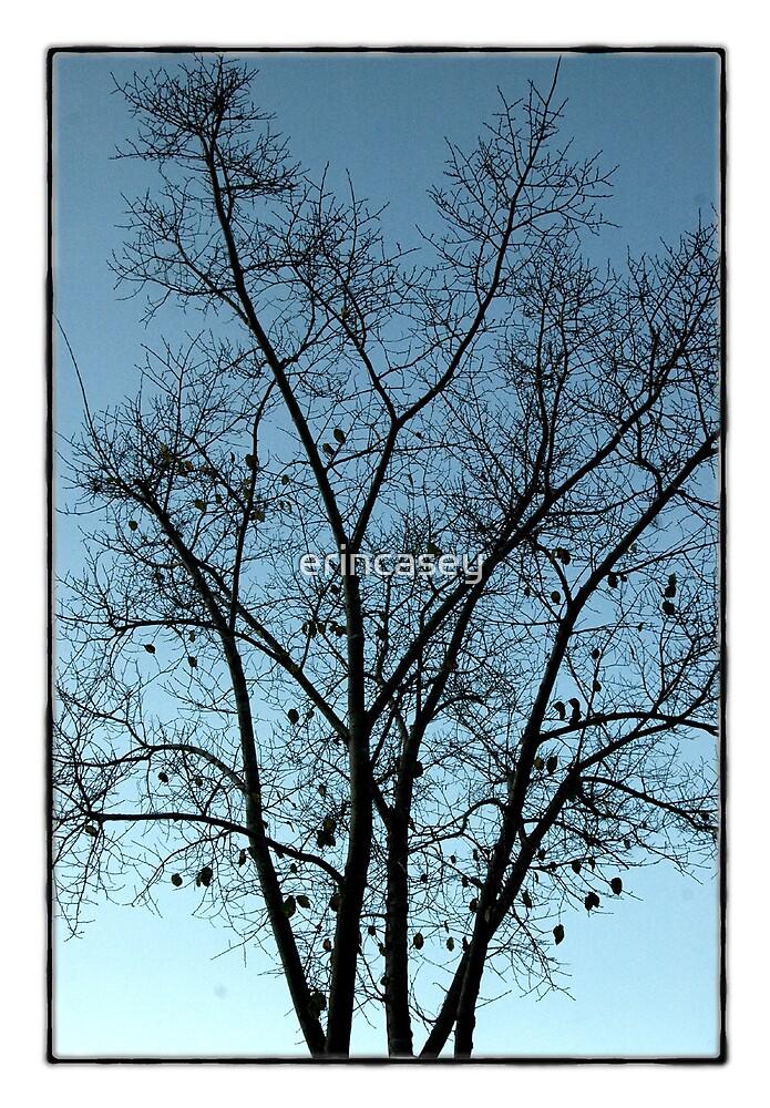 Tree by erincasey