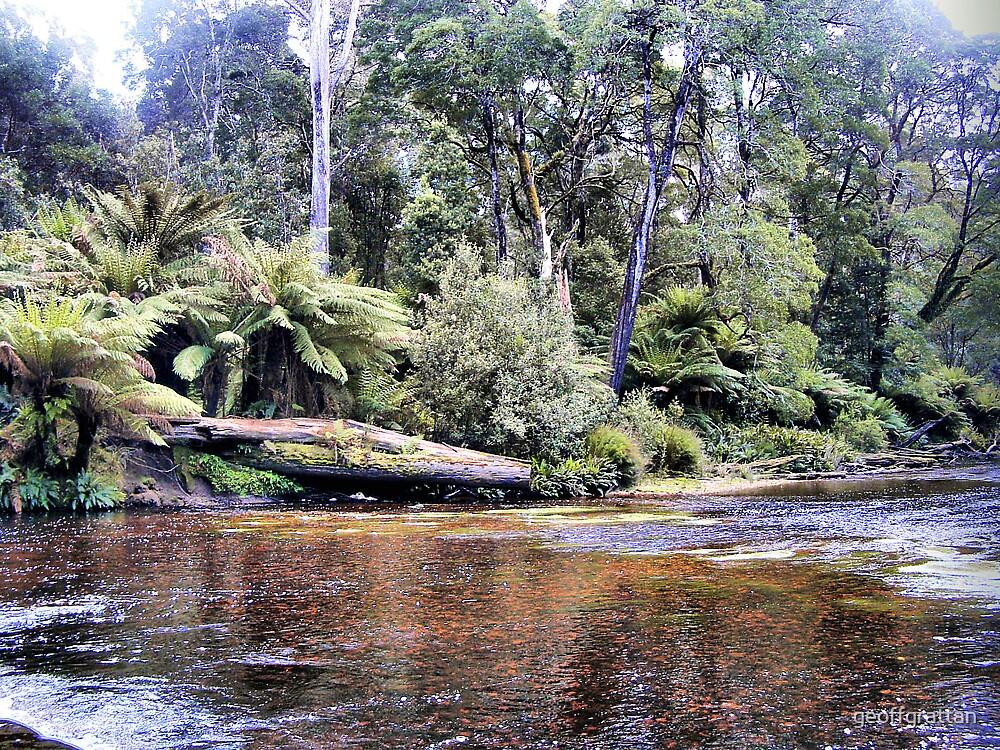 mountain stream tasmania by geoffgrattan