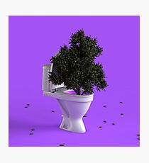 Toilet Tree Photographic Print