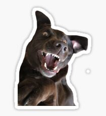 Labrador Dog Sticker