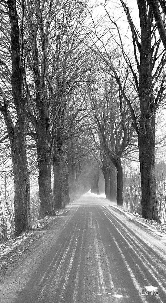 Winter road, Jizera mountains, Czech Republic by Lenka