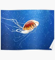 Cute Flowy Jelly Fish Poster