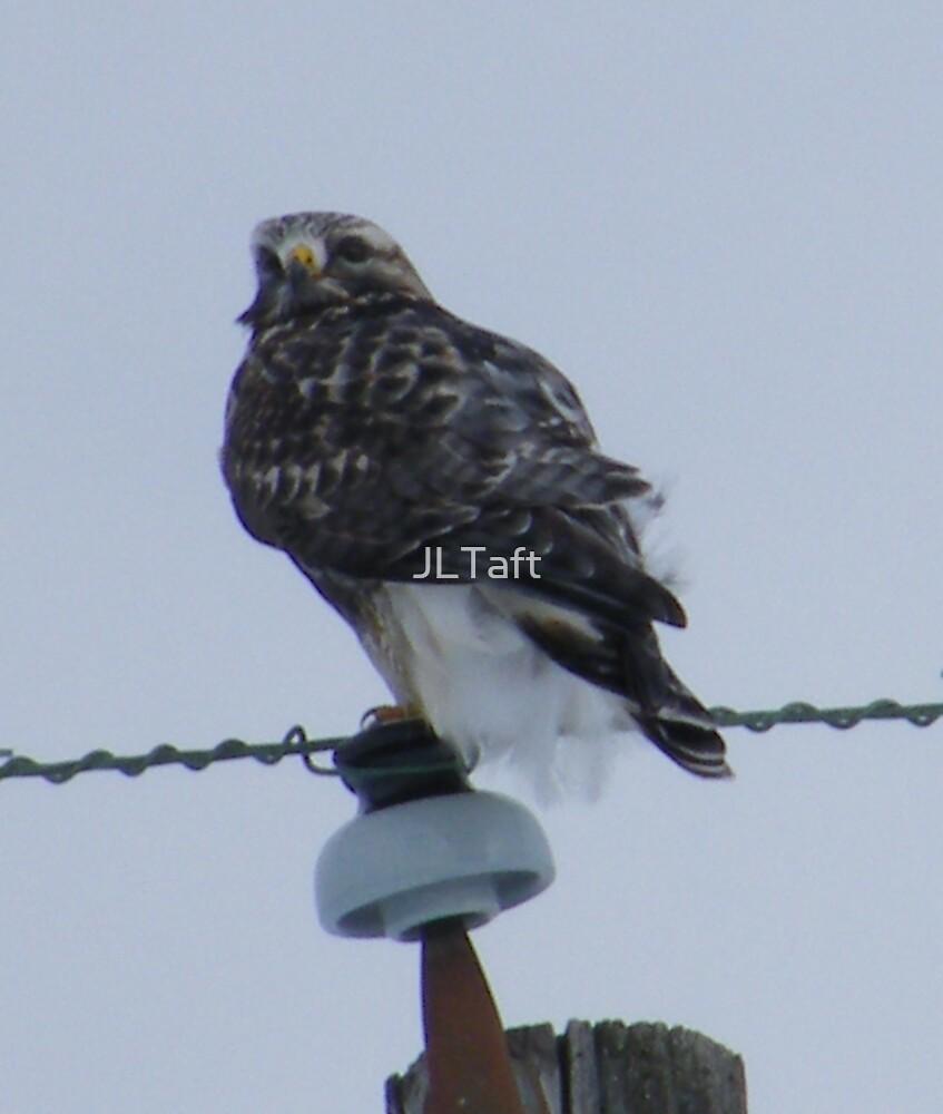 Bird on a Wire by JLTaft