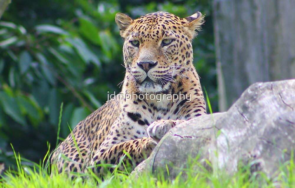 The Sri Lanka leopard.... by jdmphotography