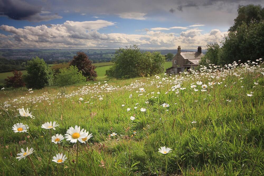 Daisy Farm by Becca  Cusworth