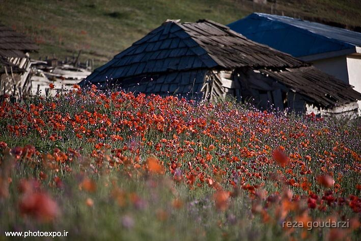 spring time by reza goudarzi
