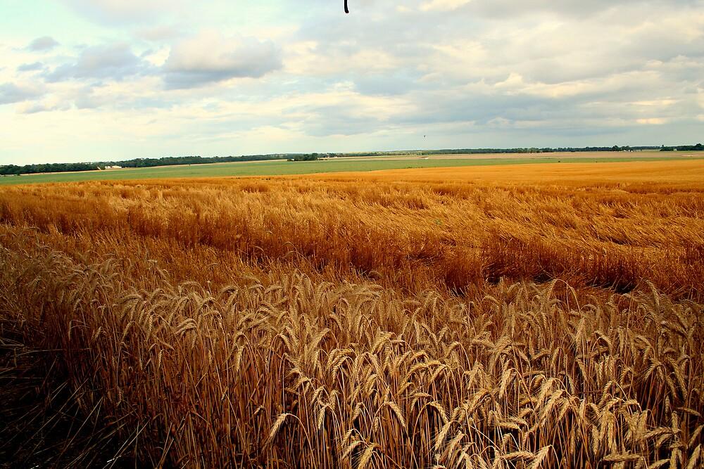 Winter Wheat Is Done by Gretchen  Mueller Steele