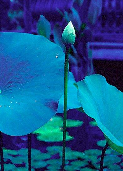 Blue Lotus Bud by Candace Byington