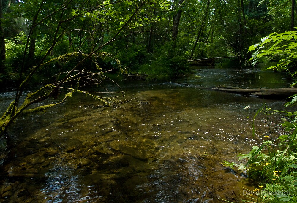 The Stream in the Woods by David Friederich