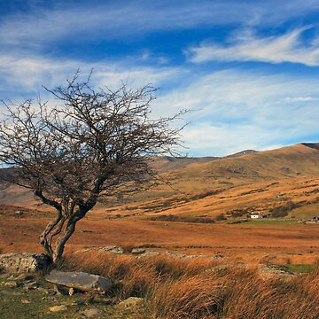 Ogwen Valley by Plynlimon