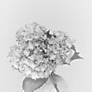 Simplicity Living in Black and White by Sherry Hallemeier