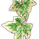 Hedera helix Variegata by Maree Clarkson