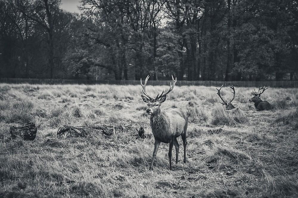 The Deer by James Galler