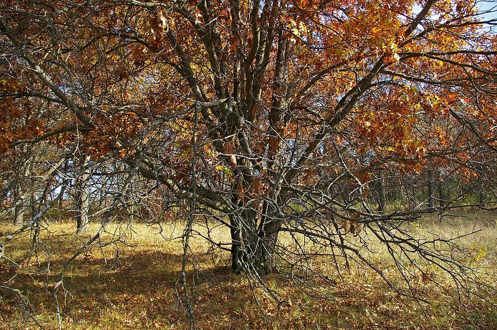 A Mighty Tree by Tom  Reynen