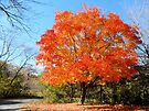 Orange Tree Autumn Landscape and Pathway by Barberelli