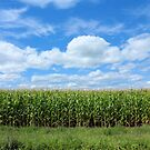 Cornfield Landscape - Nature Photography by Barberelli by Barberelli
