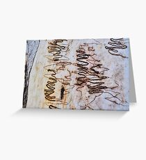 Scribbly Gum Greeting Card