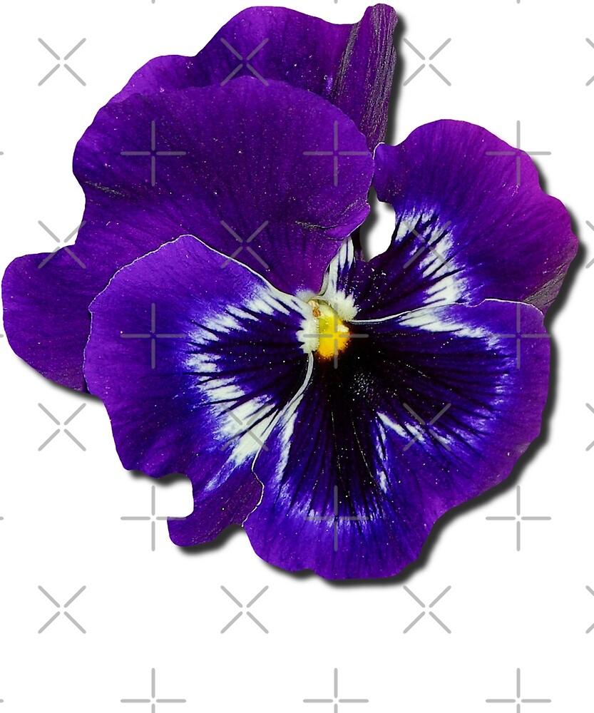 Pansy Purple Flower Beautiful Meditation Yoga Peace Garden by twizzler3b