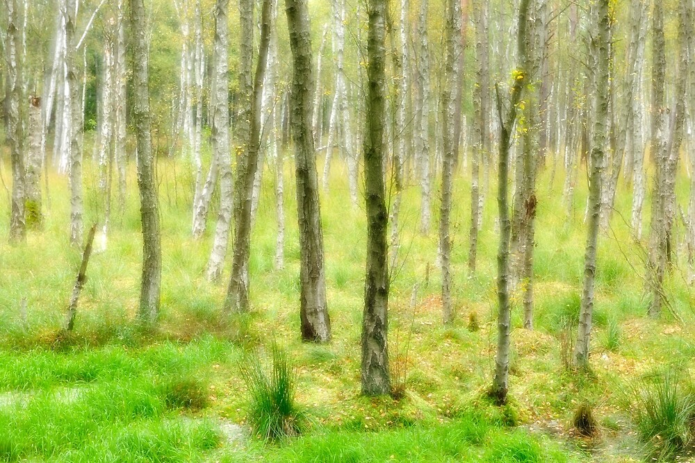 Marshy Forest by AVTG