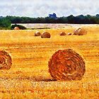 Hay bales landscape, Wexford, Ireland by David Carton