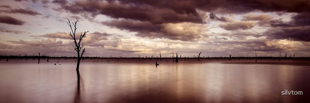 Lake Mulwala by Silvia Tomarchio