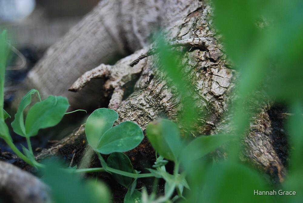 Hidden Roots by Hannah Grace