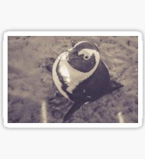 Adorable African Penguin Series 3 of 4 Sticker