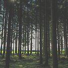 In the forest von nurmut