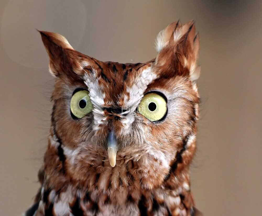"""""""Who"""" gives a """"hoot?"""" by BigD"""