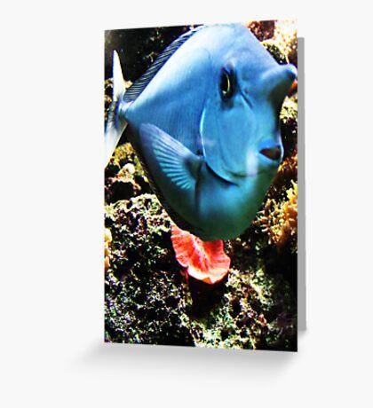 Funny Face Fish  Greeting Card