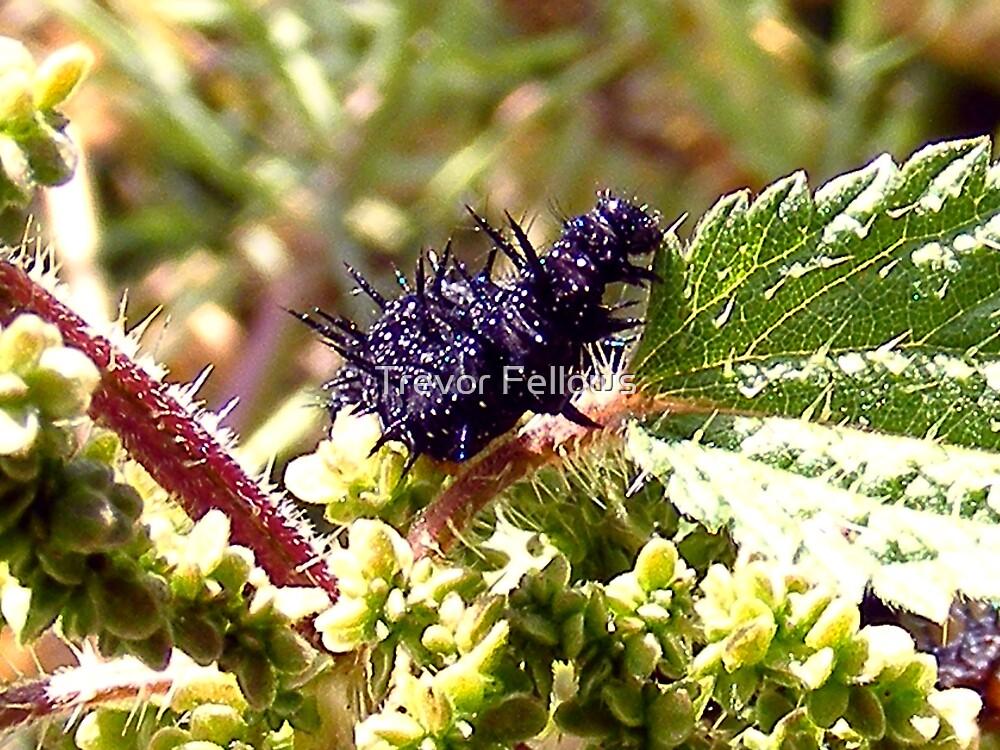 Caterpillar by Trevor Fellows