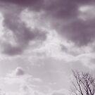 Purple Clouds by Judi FitzPatrick