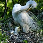 Pruning first then Feeding by TJ Baccari Photography