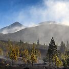 El Teide: The Last Trees by Kasia-D