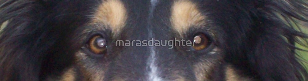 rough collie eyes by marasdaughter