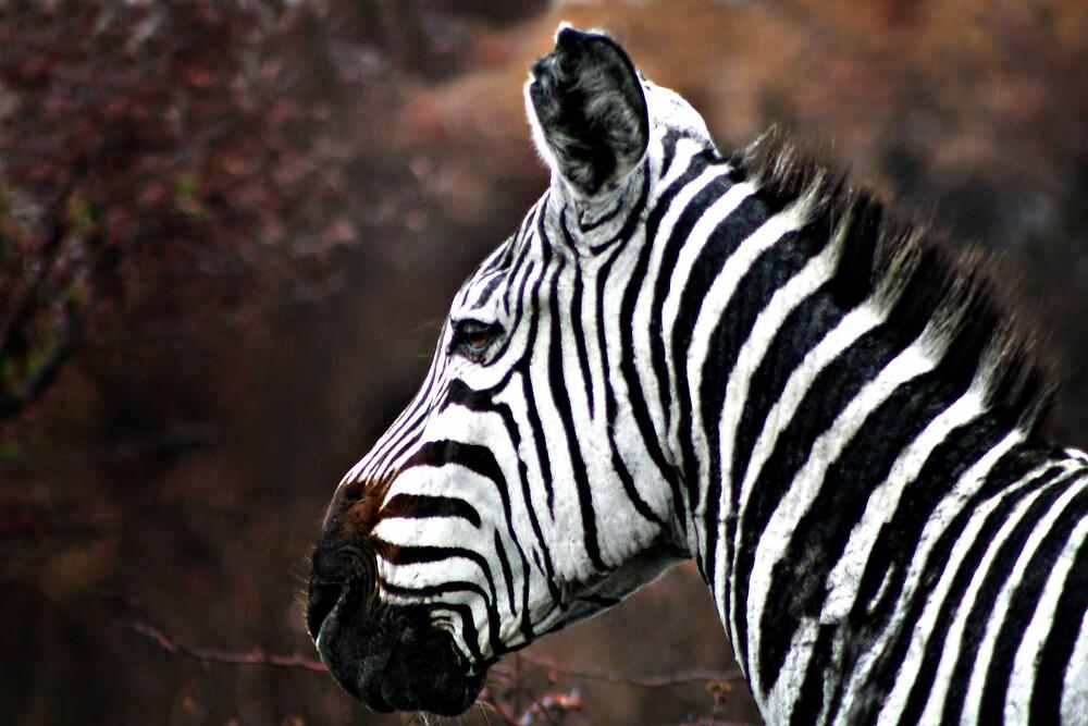 Portrait of a Zebra by Scott Ward