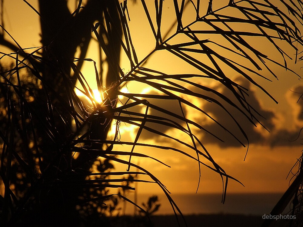 """""""Palm Morning"""" by debsphotos"""