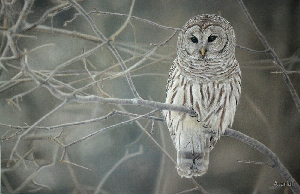 Owl by Atarial