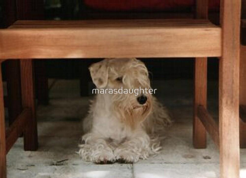 sealyham terrier laying by marasdaughter